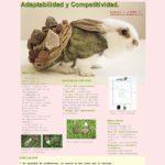 poster_conejo